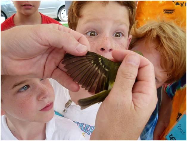 Current Projects | Baton Rouge Audubon Society