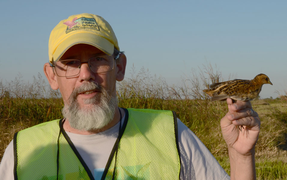 LABO primary bander, Dan Mooney, with a banded Yellow Rail during the Yellow Rails and Rice Festival near Thornwell. Photo by Erik Johnson